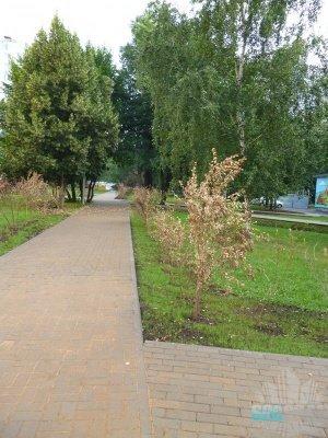 Озеленение на улице Абрамцевская